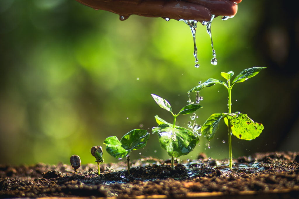 Plant growing in rain